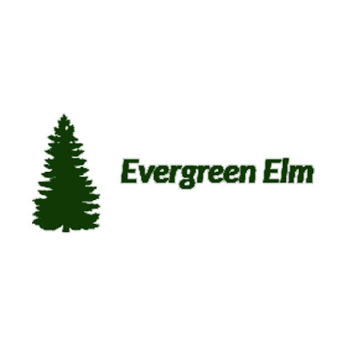 Evergreen Elm